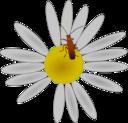 גינון אקולוגי - פרח וחרק